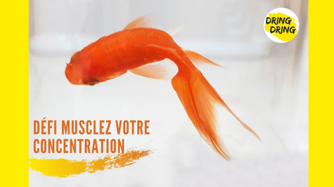 Muscler votre attention